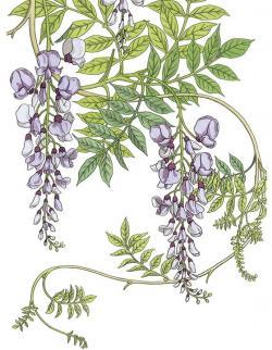 Floral clipart art deco