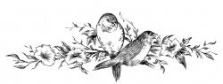 Drawn lovebird old fashioned flower