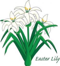 Floral clipart easter lily