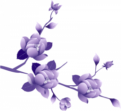 Purple Rose clipart transparent background