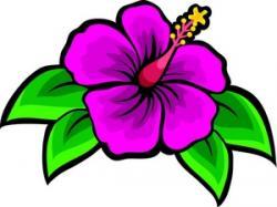 Floral clipart gumamela