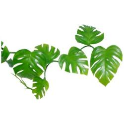 Safari clipart rainforest vine