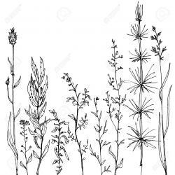 Drawn wildflower cartoon