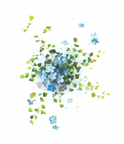 Hydrangea clipart transparent