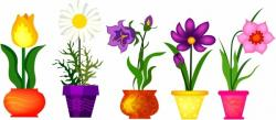 Crocus clipart purple daisy