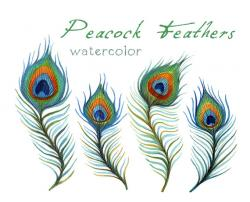 Mauve clipart peacock feather