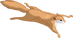 Flying Squirrel clipart