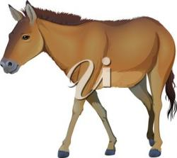Foal clipart brown objects