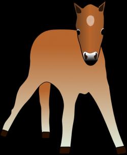 Foal clipart cartoon