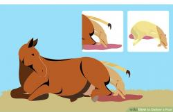 Foal clipart hour