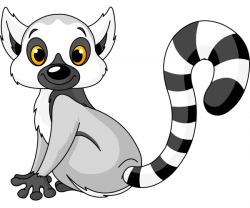 Lemur clipart ring tail