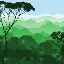Rainforest clipart rainforest canopy