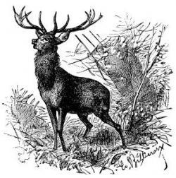 Caribou clipart vintage animal