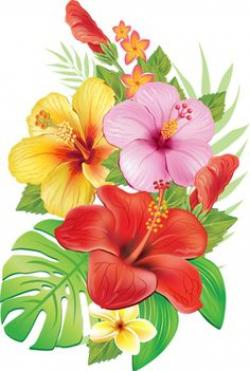 Frangipani clipart red hibiscus