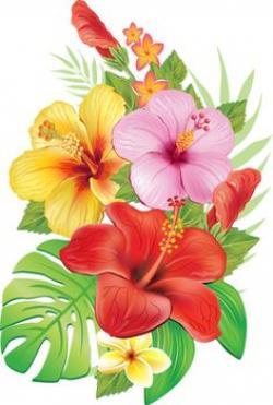 Frangipani clipart red hibiscus