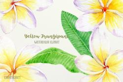 Frangipani clipart yellow hibiscus