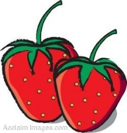Rhubarb clipart