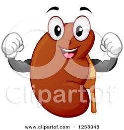 Fun clipart kidney