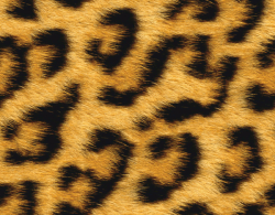 Cheetah clipart fur