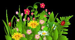 Cosmos clipart flower garden