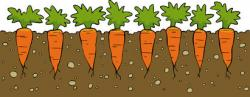 Carrot clipart carrot garden
