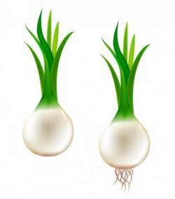 Drawn onion bawang