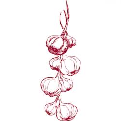 Garlic clipart border