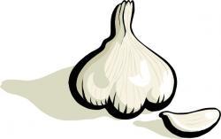 Garlic clipart vector