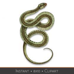 Garter Snake clipart viper snake