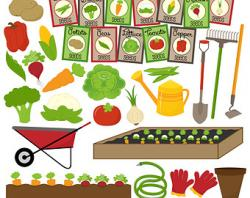 Vegetable clipart vegetable patch