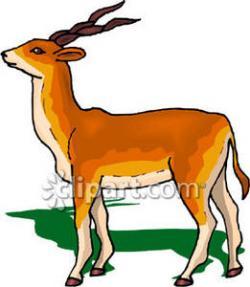 Gazelle clipart dear animal