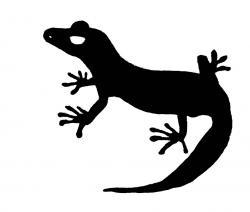 Newt clipart gecko