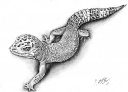 Drawn reptile gecko
