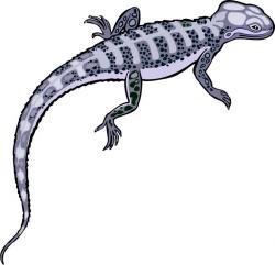 Gecko clipart vertebrate