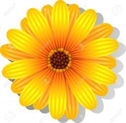 Gerbera clipart daisy flower