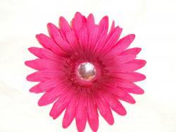 Gerbera clipart pink daisy