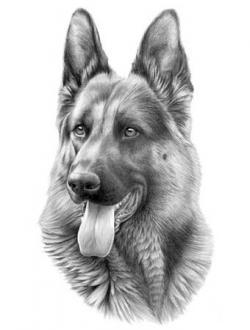 Drawn german shepherd portrait