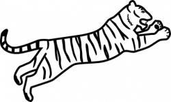 Drawn white tiger jump