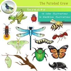 Colors clipart insect