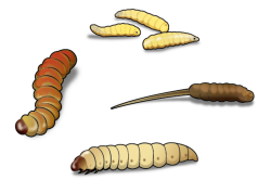 Glitch clipart mealworm
