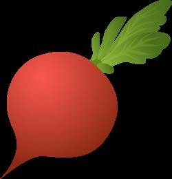 Beetroot clipart radish