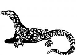 Komodo Dragon clipart goanna