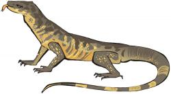 Drawn reptile monitor lizard