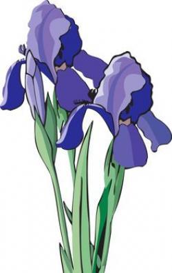 Iris clipart art