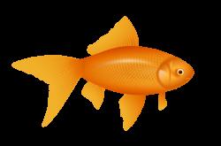 Fish Net clipart goldfish