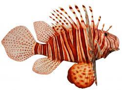 Lionfish clipart Puffer Fish Clipart