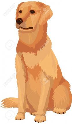 Golden clipart labrador
