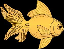 Fins clipart large fish
