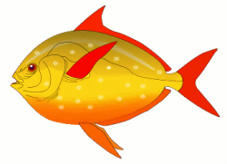 Fins clipart colorful fish