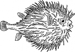 Anglerfish clipart puffer fish